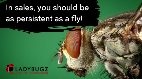 In sales, you should be as persistent as a fly!